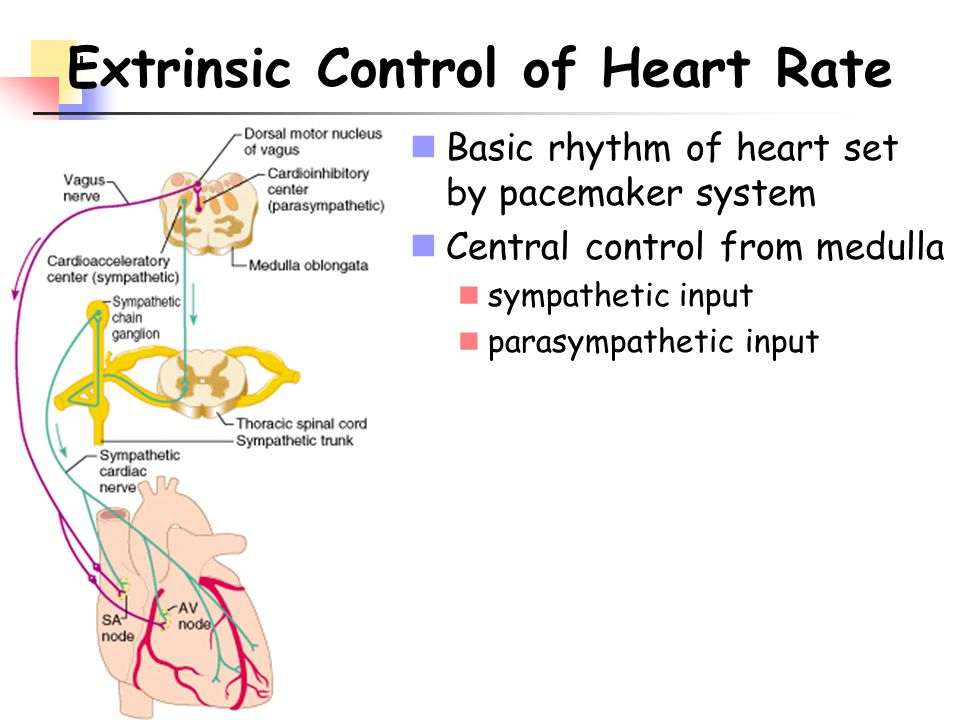 Extrinsic Control of Heart Rate