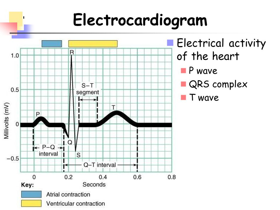 Electrocardiogram Electrical activity of the heart P wave QRS complex