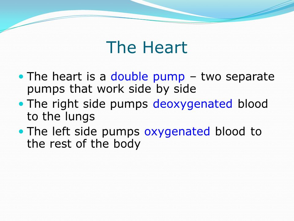 The Heart The heart is a double pump – two separate pumps that work side by side. The right side pumps deoxygenated blood to the lungs.