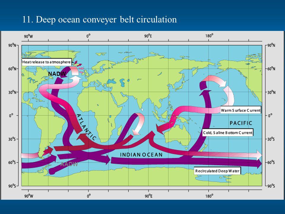 11. Deep ocean conveyer belt circulation