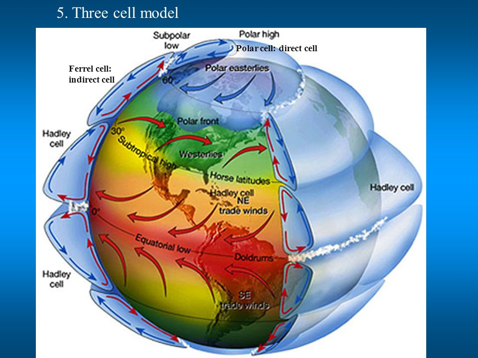 5. Three cell model Polar cell: direct cell Ferrel cell: indirect cell