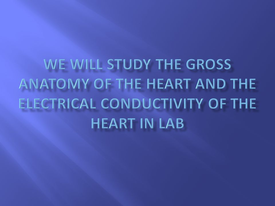 We will study the gross anatomy of the heart and the electrical conductivity of the heart in lab