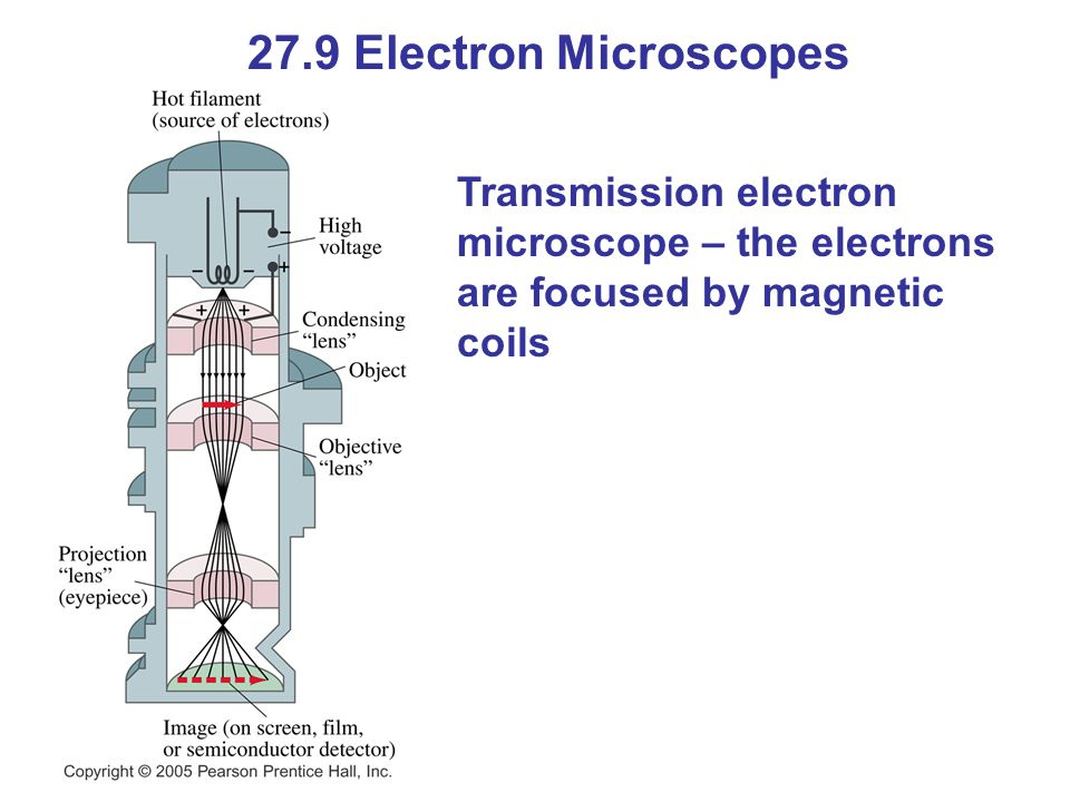 27.9 Electron Microscopes Transmission electron microscope – the electrons are focused by magnetic coils.