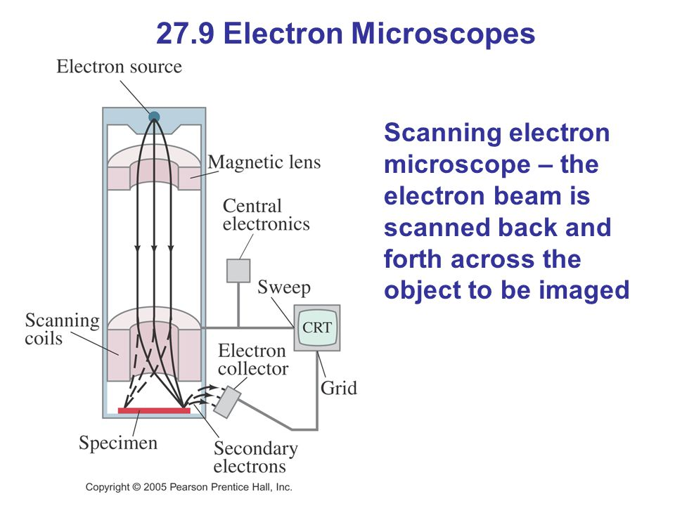 27.9 Electron Microscopes Scanning electron microscope – the electron beam is scanned back and forth across the object to be imaged.