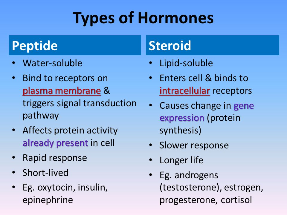 Types of Hormones Peptide Steroid Water-soluble