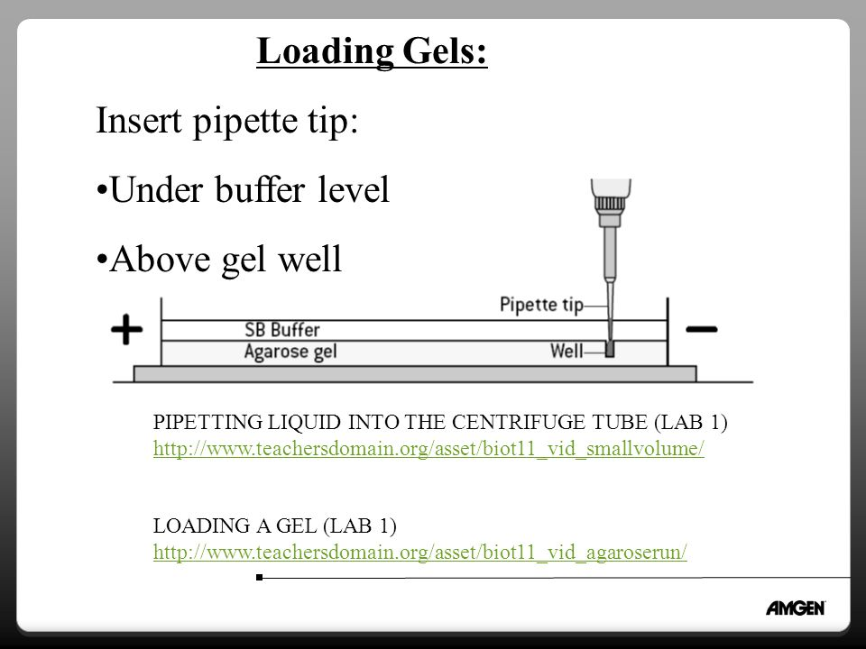Loading Gels: Insert pipette tip: Under buffer level Above gel well