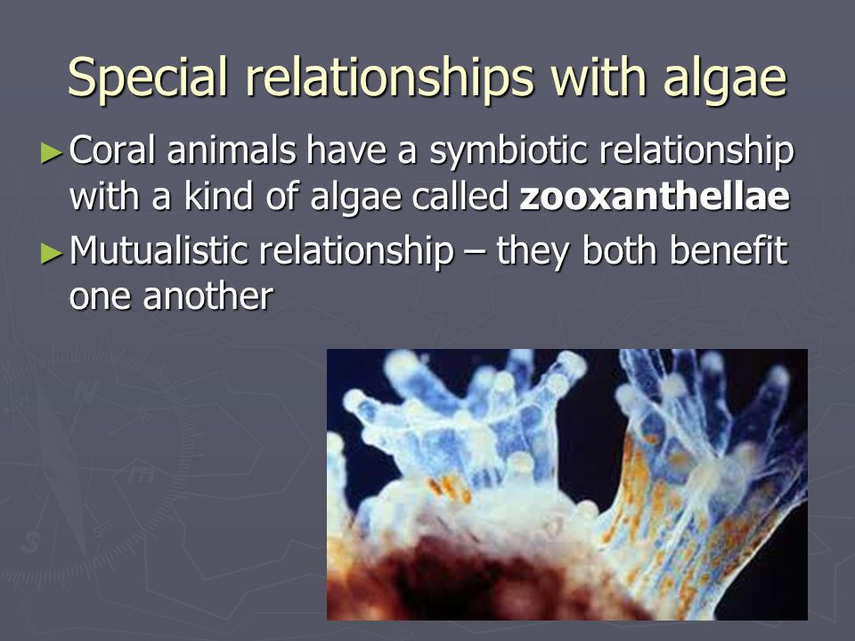 Special relationships with algae