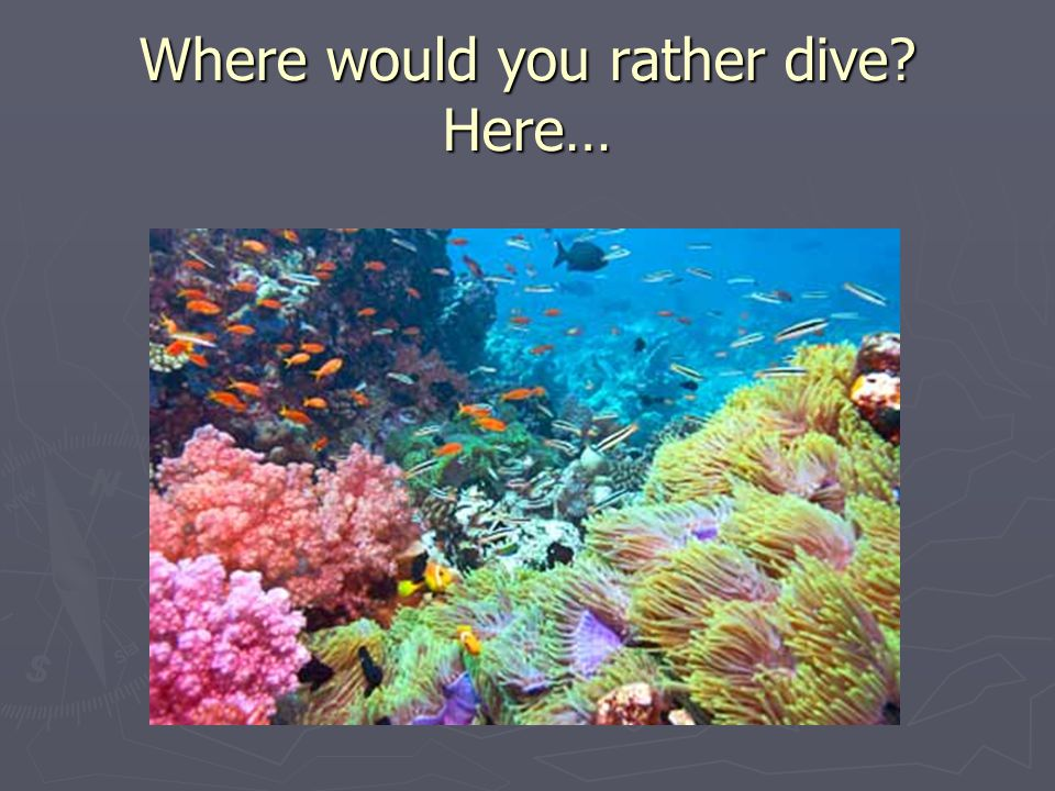 Where would you rather dive Here…