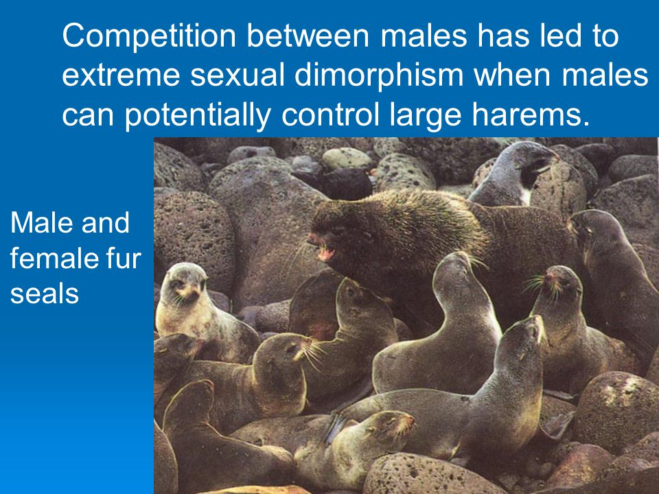 Competition between males has led to