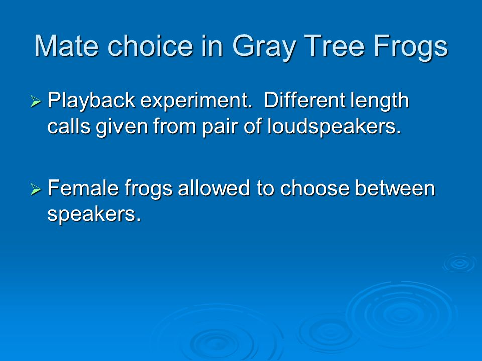 Mate choice in Gray Tree Frogs