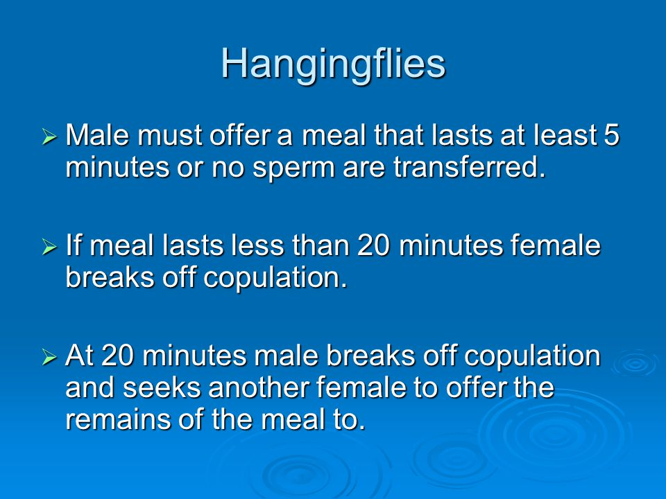 Hangingflies Male must offer a meal that lasts at least 5 minutes or no sperm are transferred.