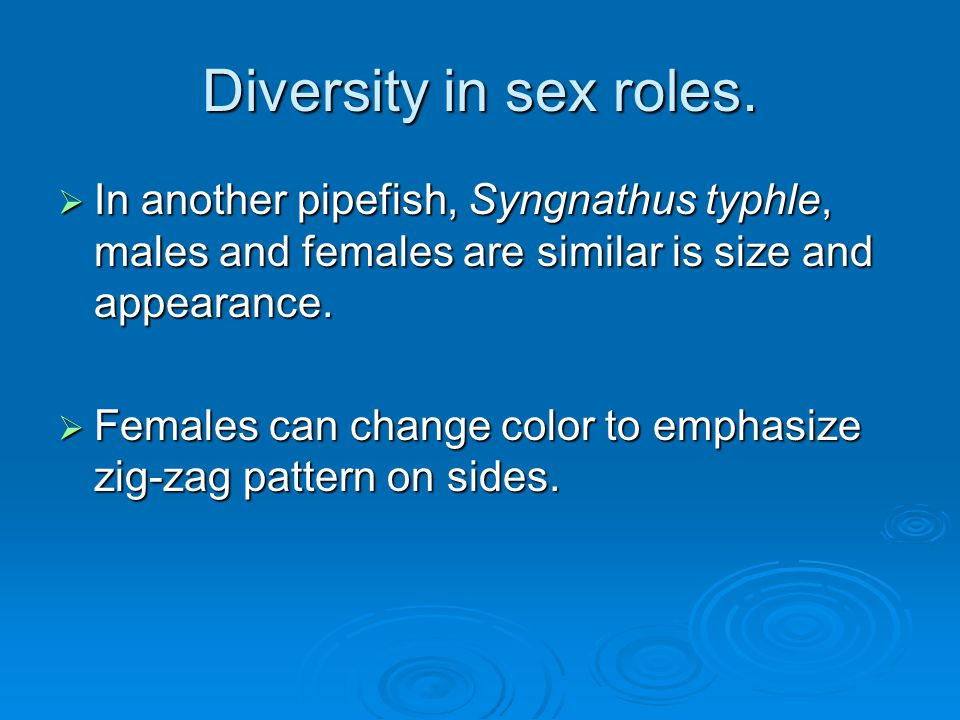 Diversity in sex roles. In another pipefish, Syngnathus typhle, males and females are similar is size and appearance.