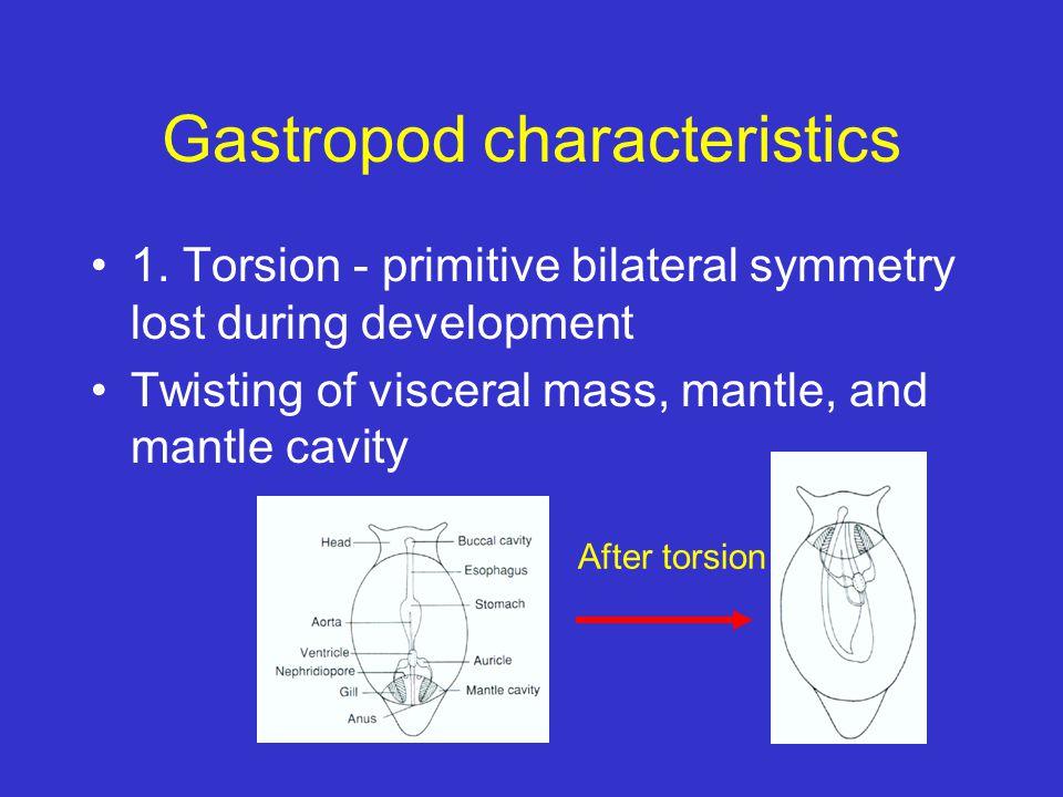 Gastropod characteristics