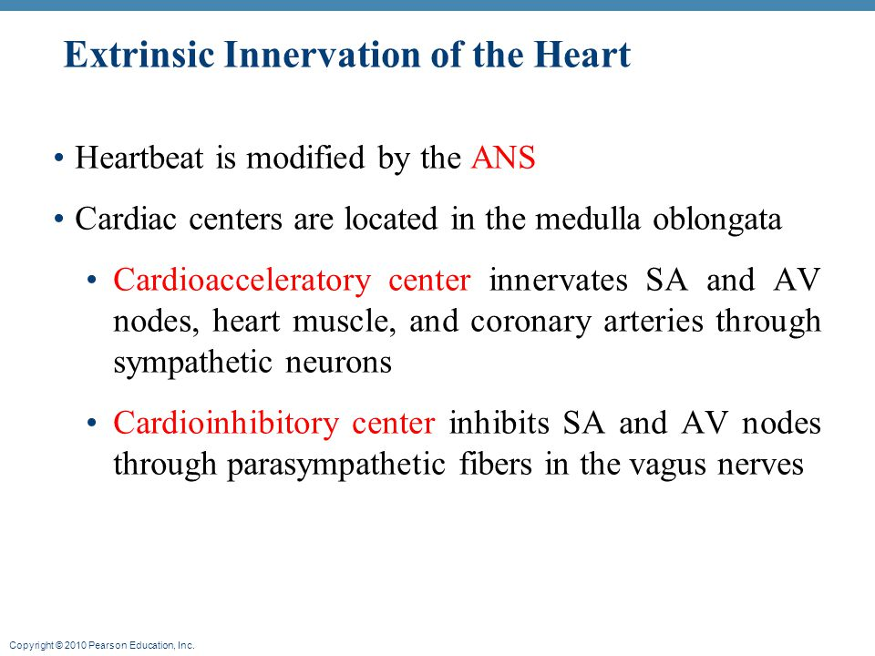 Extrinsic Innervation of the Heart