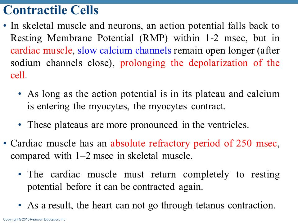 Contractile Cells