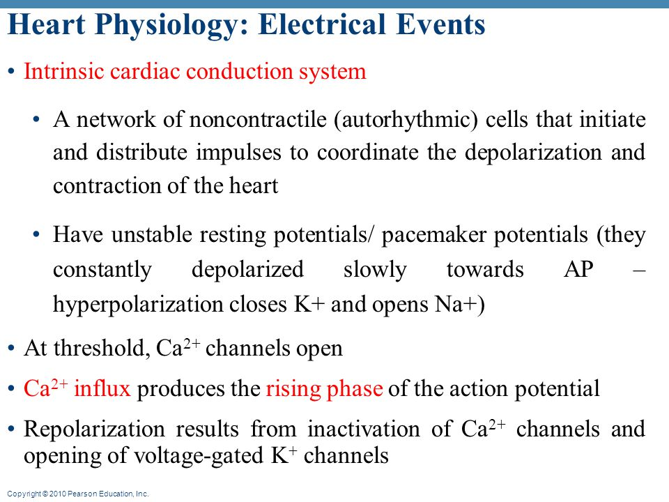 Heart Physiology: Electrical Events