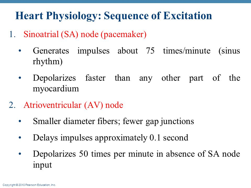 Heart Physiology: Sequence of Excitation
