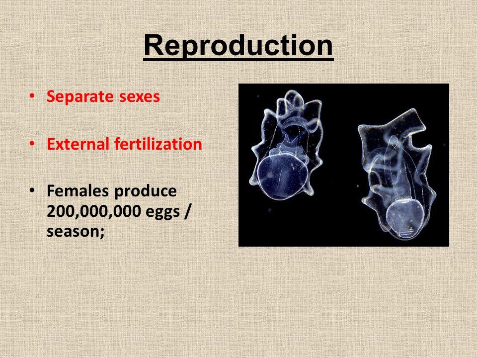 Reproduction Separate sexes External fertilization
