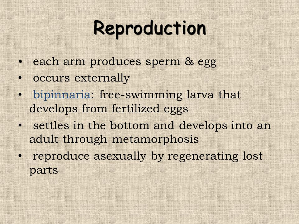 Reproduction each arm produces sperm & egg occurs externally