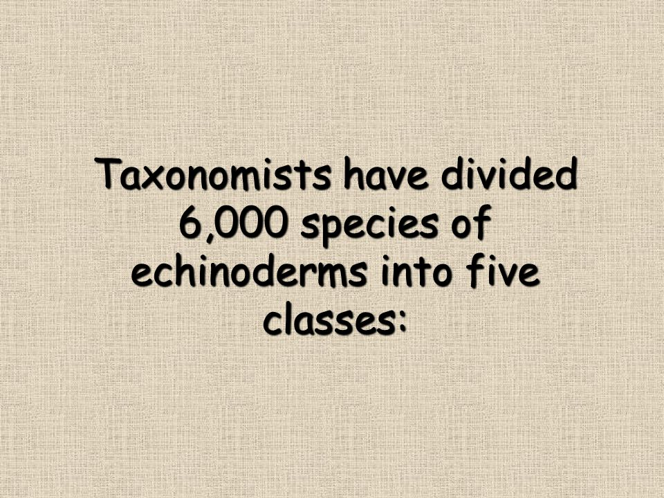 Taxonomists have divided 6,000 species of echinoderms into five classes: