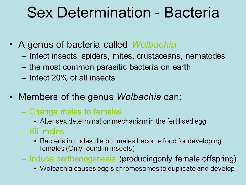 Sex Determination - Bacteria