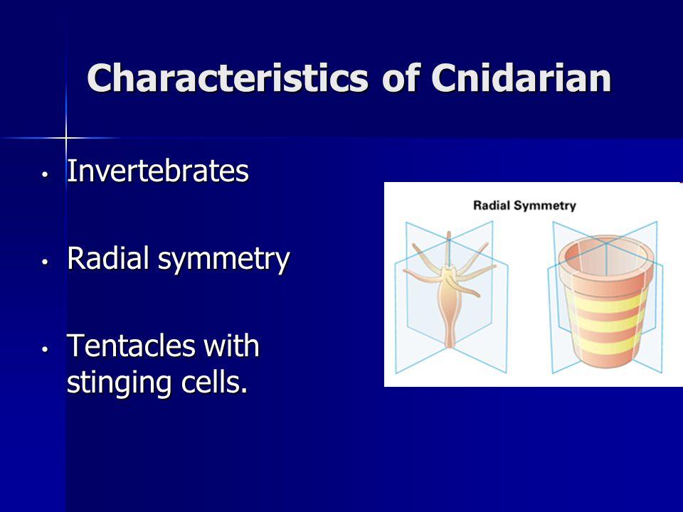 Characteristics of Cnidarian