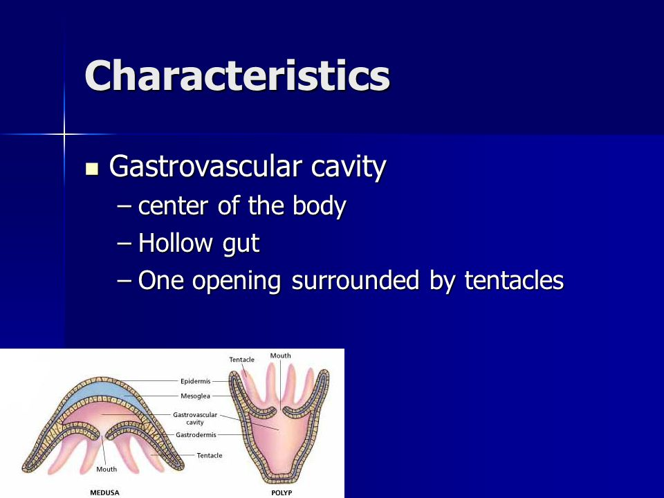 Characteristics Gastrovascular cavity center of the body Hollow gut