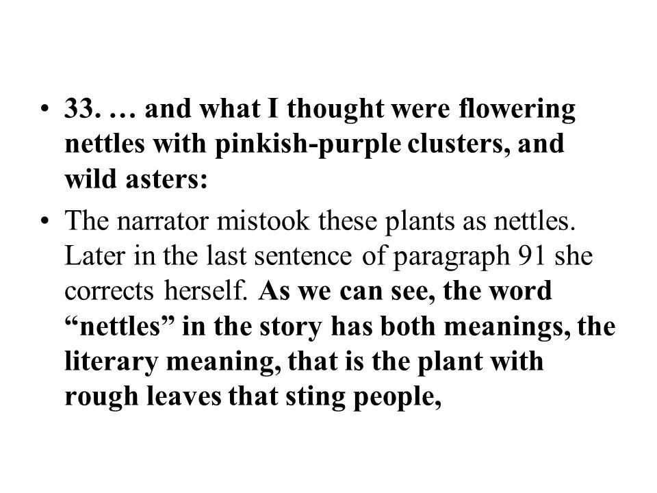 33. … and what I thought were flowering nettles with pinkish-purple clusters, and wild asters: