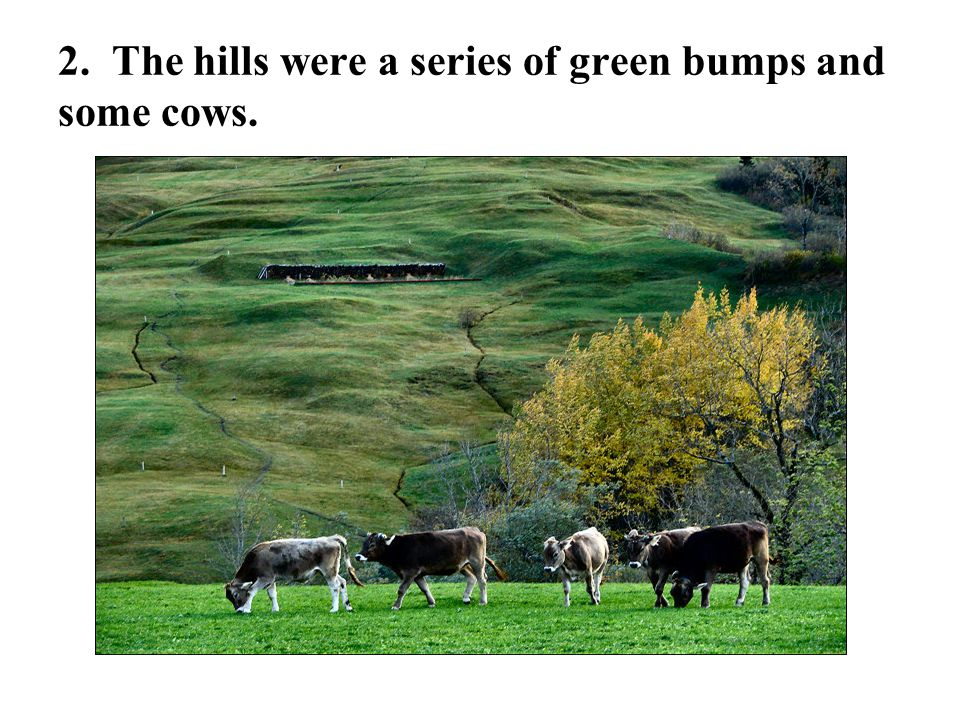 2. The hills were a series of green bumps and some cows.