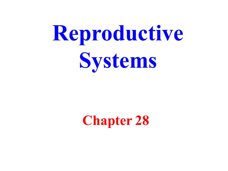 Reproductive Systems Chapter 28