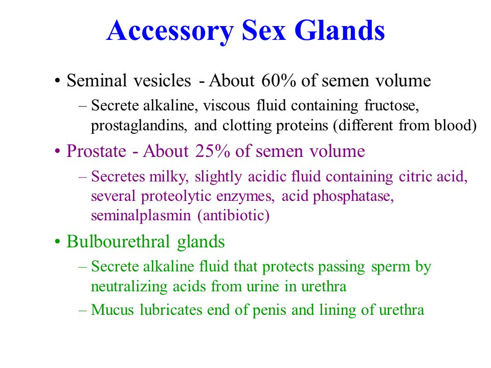 Accessory Sex Glands Seminal vesicles - About 60% of semen volume