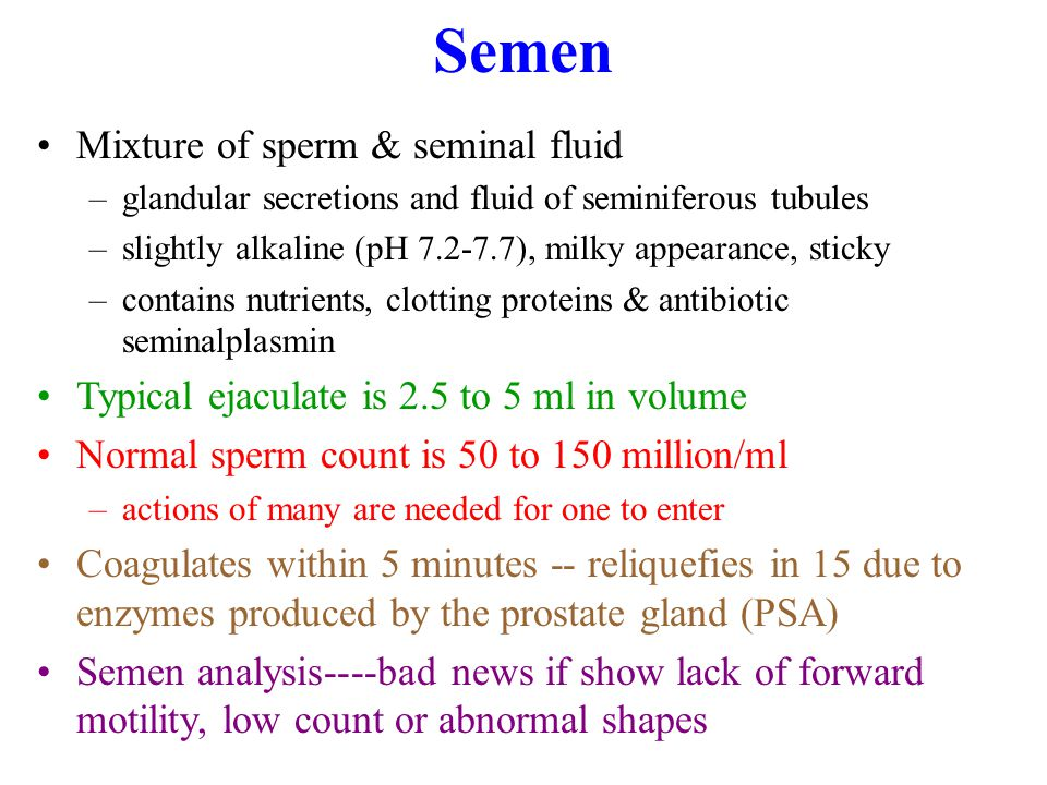 Semen Mixture of sperm & seminal fluid