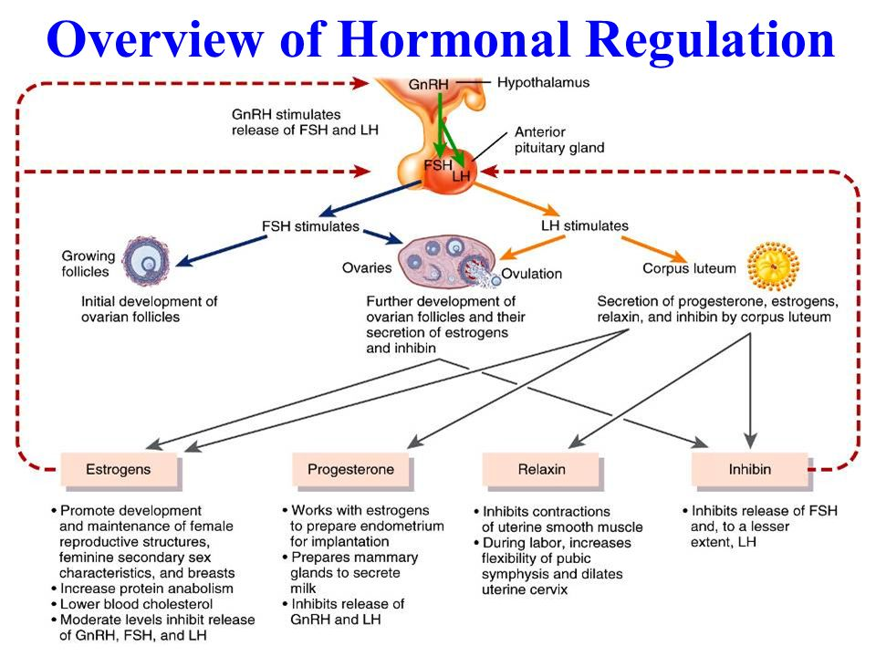 Overview of Hormonal Regulation