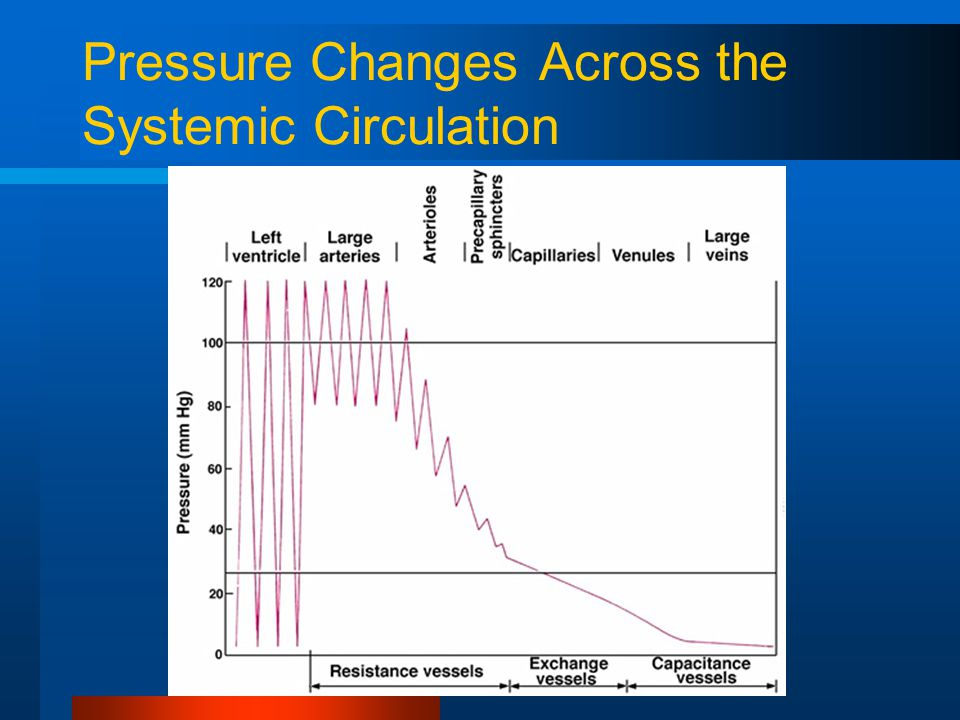 Pressure Changes Across the Systemic Circulation