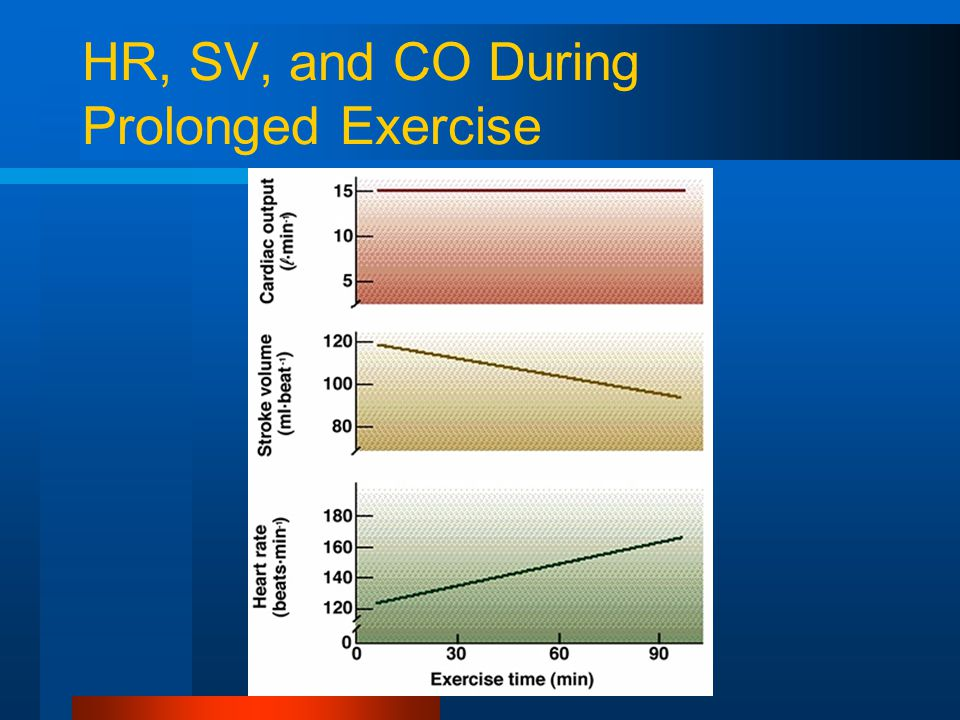 HR, SV, and CO During Prolonged Exercise