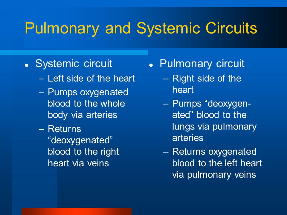 Pulmonary and Systemic Circuits