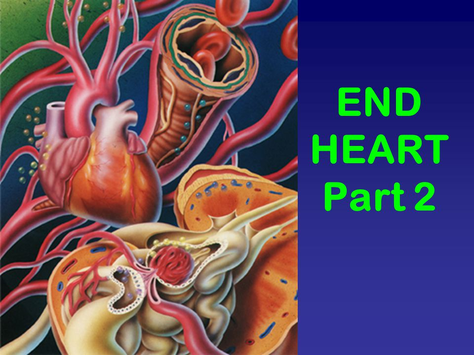 END HEART Part 2