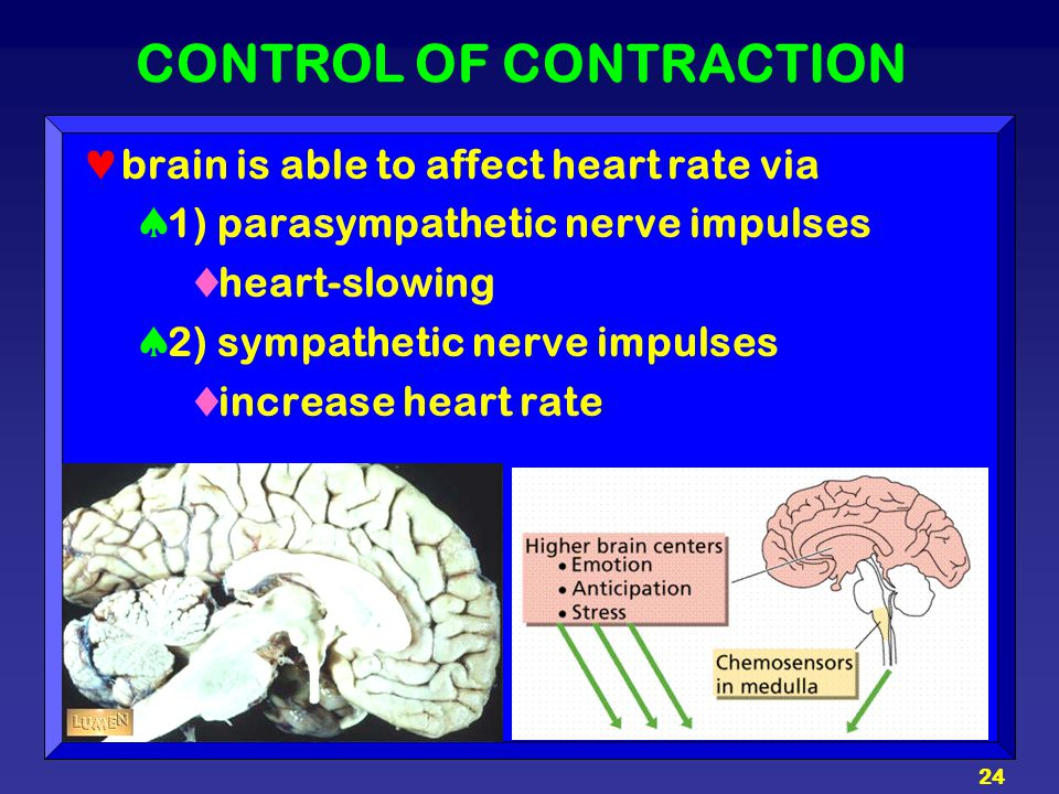 CONTROL OF CONTRACTION