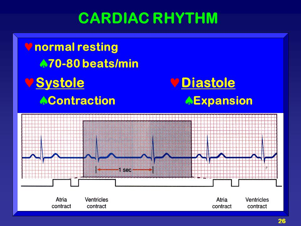 CARDIAC RHYTHM Systole Diastole normal resting 70-80 beats/min