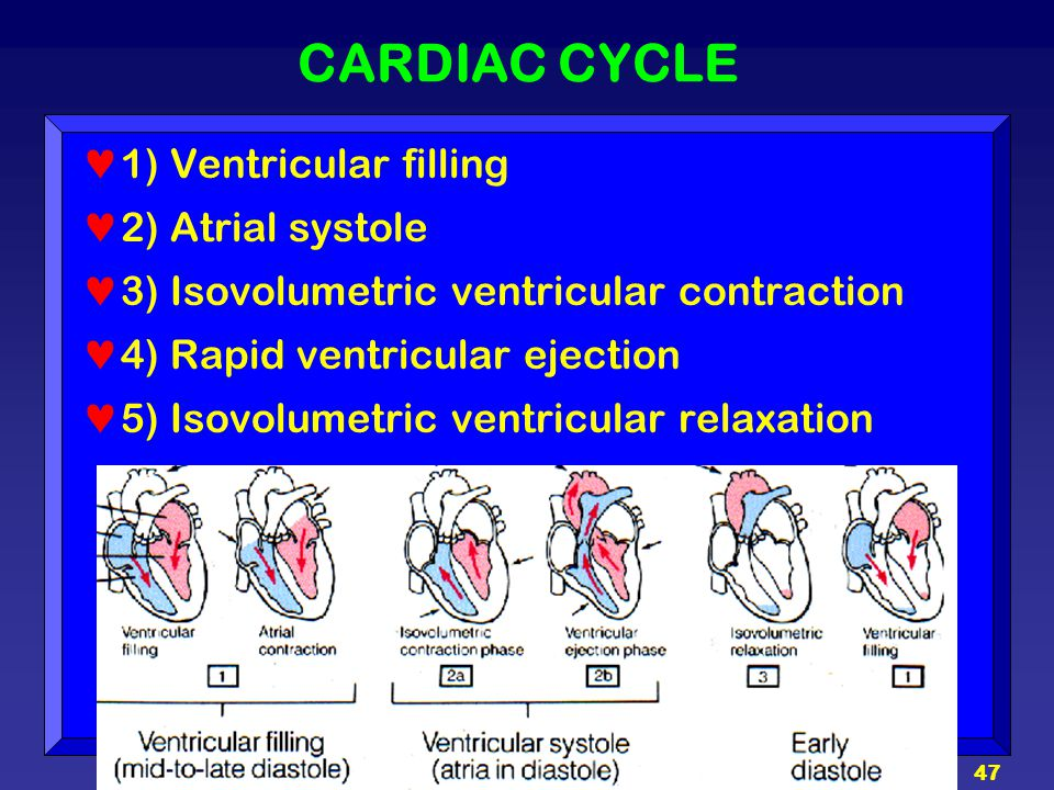 CARDIAC CYCLE 1) Ventricular filling 2) Atrial systole