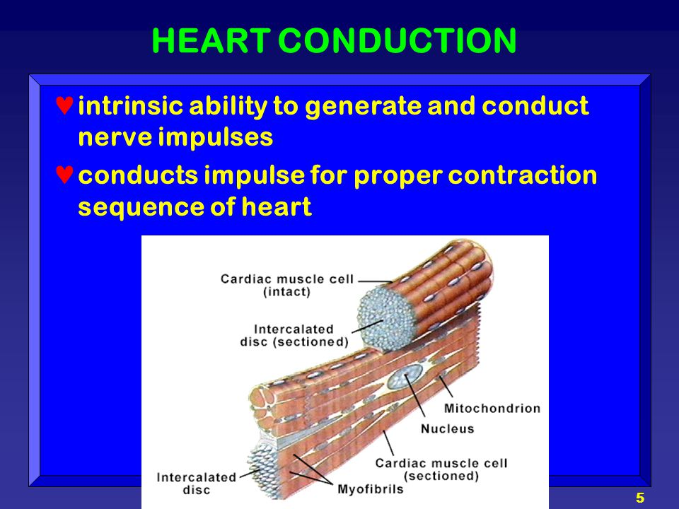 HEART CONDUCTION intrinsic ability to generate and conduct nerve impulses.