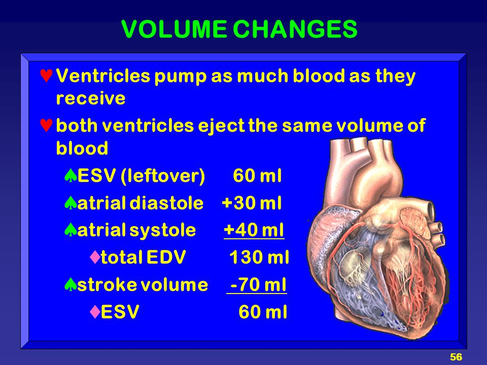 VOLUME CHANGES Ventricles pump as much blood as they receive