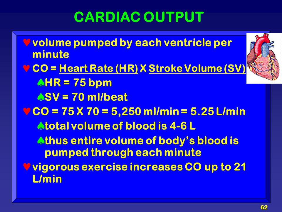 CARDIAC OUTPUT volume pumped by each ventricle per minute HR = 75 bpm
