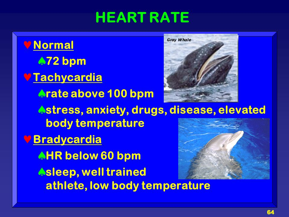 HEART RATE Normal 72 bpm Tachycardia rate above 100 bpm