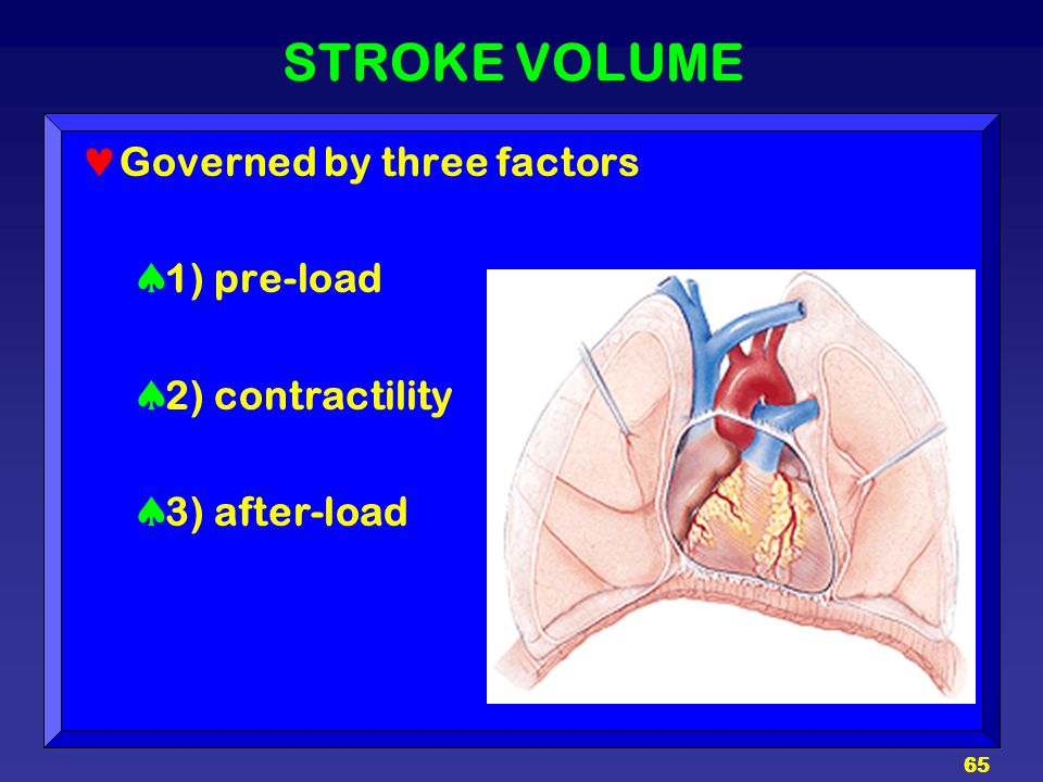 STROKE VOLUME Governed by three factors 1) pre-load 2) contractility