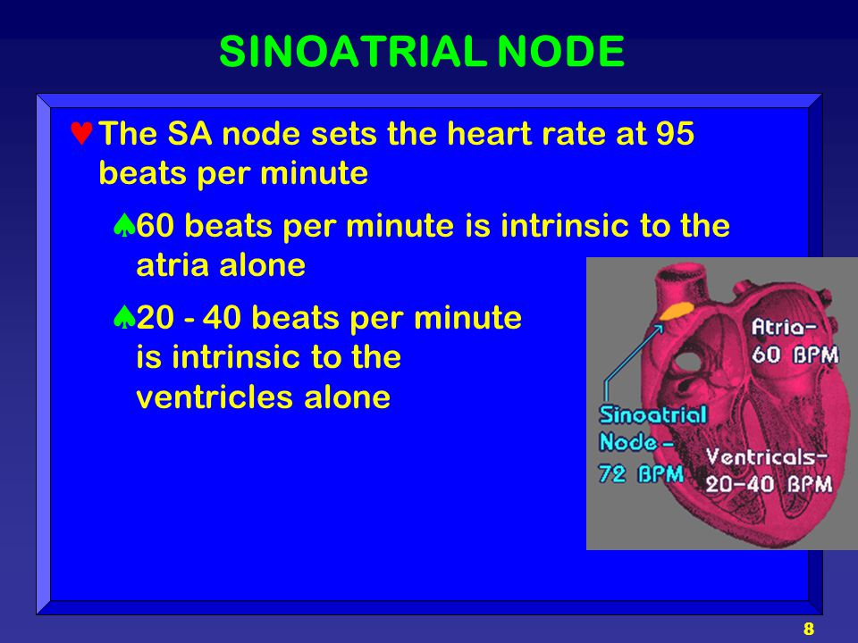 SINOATRIAL NODE The SA node sets the heart rate at 95 beats per minute