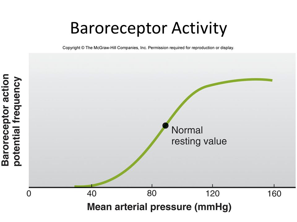 Baroreceptor Activity