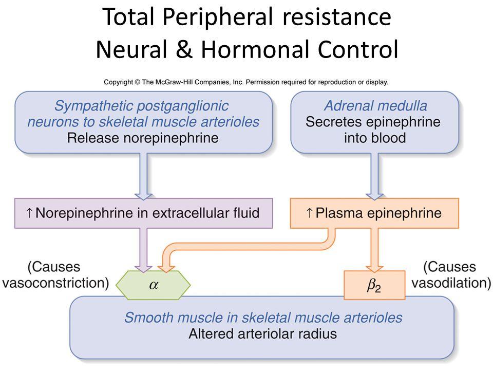 Total Peripheral resistance Neural & Hormonal Control