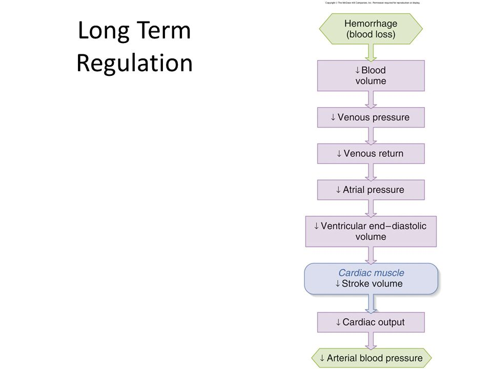 Long Term Regulation