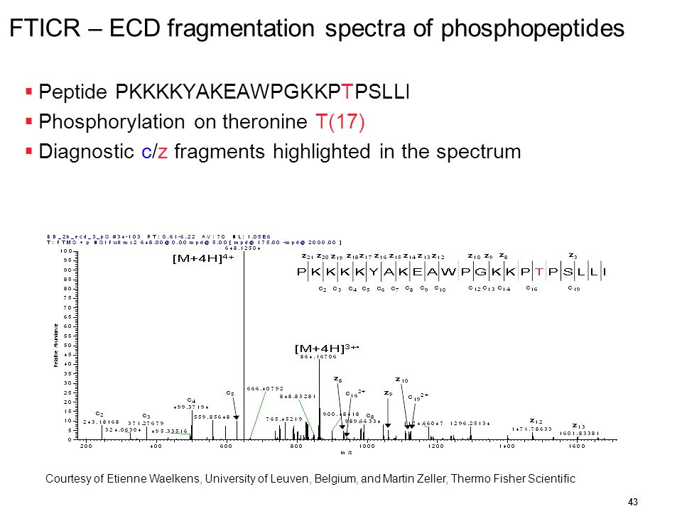 FTICR – ECD fragmentation spectra of phosphopeptides